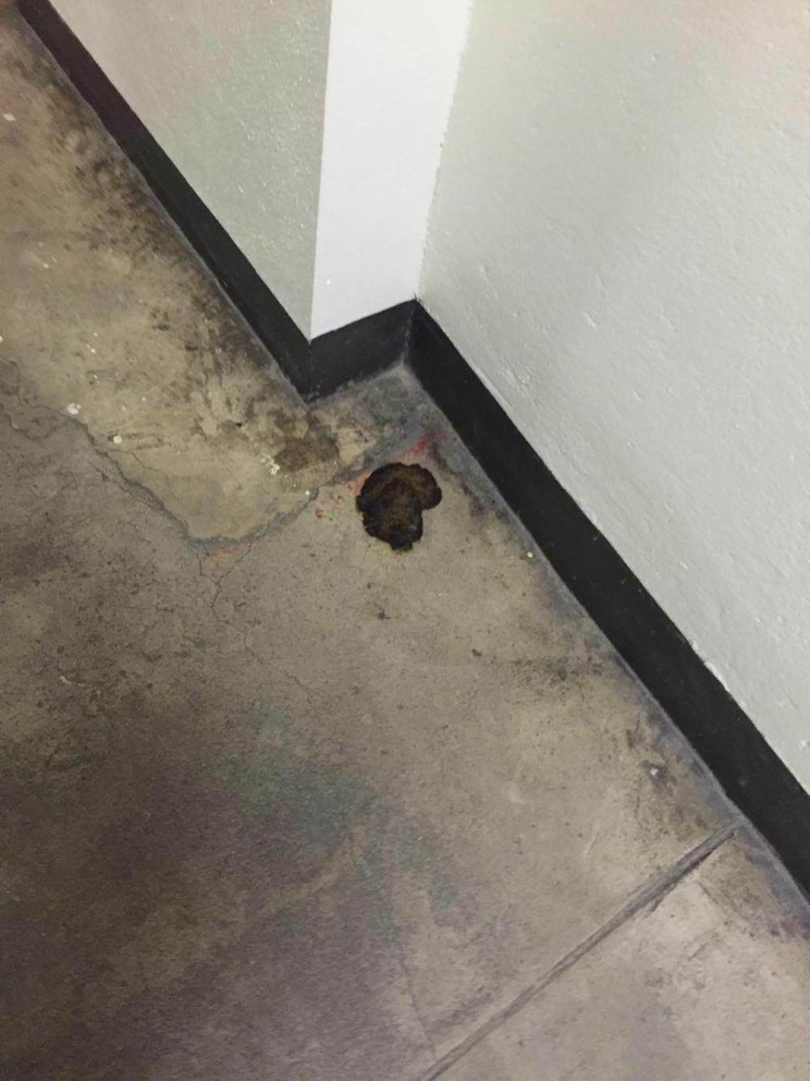 Feces in Henry Hall